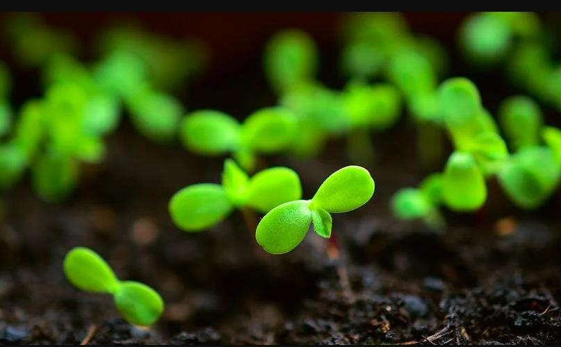 semis brico M